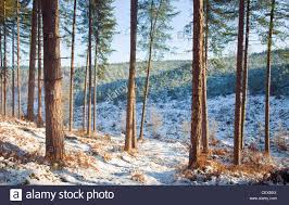 beautiful winter scenes in and around abrahams valley in early