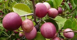 cariibean fruits