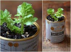 10 Vegetables U0026 Herbs You by 10 Vegetables U0026 Herbs You Can Eat Once And Regrow Forever Food