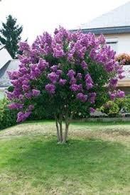 Flowering Shrubs For Partial Sun - 274 best arbustos y arboles ornamentales images on pinterest