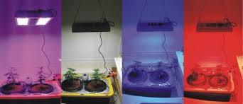 what color light do plants grow best in saga 840w led grow light led gro pro inc