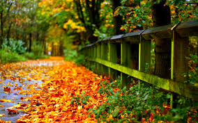 halloween fall wallpaper autumn meditation wise blood fall u0026 halloween pinterest