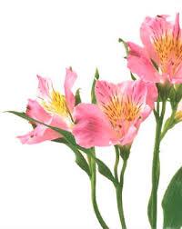 Flower Companies Indiafloristnetwork Com Reviews U2013 Indiafloristnetwork Reviews