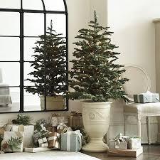 best 25 noble fir tree ideas on pinterest balsam fir tree fir