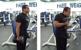 Bench Bicep Curls Build Bigger Bicep Peak With Dumbbell Hammer Curls On The Preacher