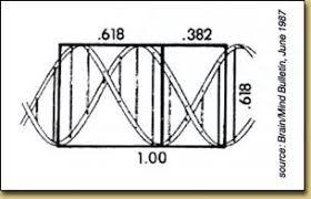 golden ratio dna spiral fibonacci numbers and nature