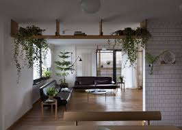 apartment plants apartment jazzed up with plants for air purification