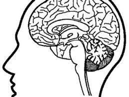 Brain Coloring Pages Of The Brain Coloring Page Free Download New Brain Coloring Page