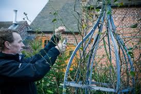 pruning english climbers advice u0026 inspiration
