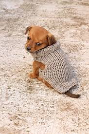 ravelry small puppy sweater pattern by louise bollanos