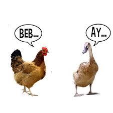 Meme Bebek - meme ayam n bebek by hengkeypad on deviantart