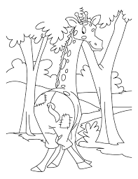 giraffe colouring pages for kids splinted giraffe coloring page
