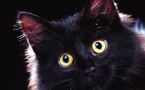 cute halloween kitten wallpaper 296 best black cats images on pinterest black cats cat art and cats