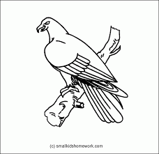 bird outlines coloring