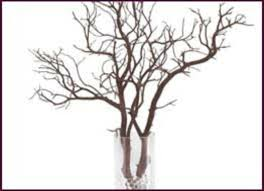 manzanita tree branches wholesale decorative branches manzanita and botanical products