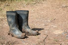 dirty riding boots dirty rubber boots in farm stock photo picture and royalty free