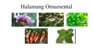 halamang ornamental
