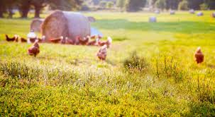 vital farms the best eggs are pasture raised