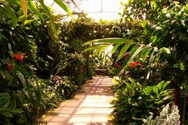 Botanical Garden Sarasota 19 Best Things To Do With In Sarasota Fl Family Attractions