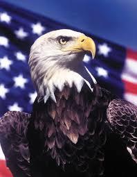 Bald Eagle On Flag American Eagle Day U2013 American Eagle Foundation