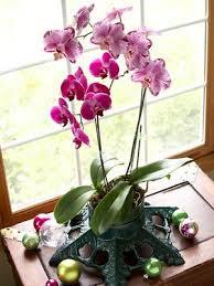 Orchids Care 13 Best Orquídeas Images On Pinterest Gardening Indoor Plants