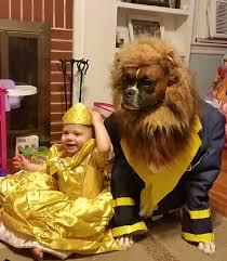 Halloween Costumes Boxer Dogs 83 Dog Halloween Costumes Pooch Diy