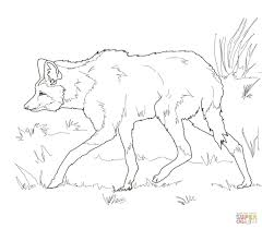 south american maned wolf coloring page free printable coloring