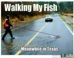 Meanwhile In Texas Meme - walking my fish meanwhile in texas rain humor funny funny