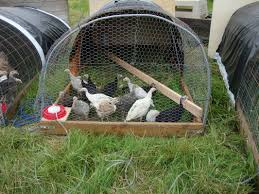 440 best build it animal housing u0026 toys images on pinterest