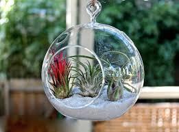 decorating fabulous glass globe hanging terrarium plants ideas