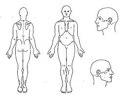 human body head anatomy coloring pages coloring sky
