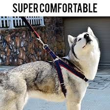 Comfortable Dog Amazon Com Ultra Dog Leash Comfortable Dog Walking Leash