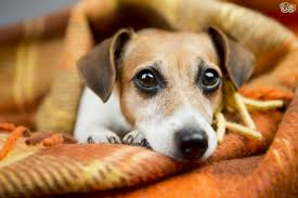 six big mistakes owners make that lead to unhappy dogs pets4homes