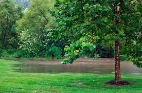 get rid of standing water with twin oaks
