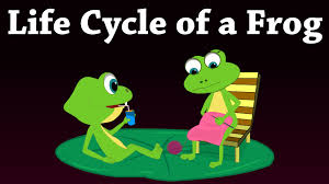 life cycle of a frog youtube