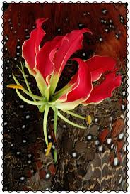 All About Flowers - 114 best flowers focus images on pinterest cut flowers flowers