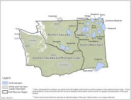 spokane washington map wolf killed by vehicle at snoqualmie pass wolves suspected at