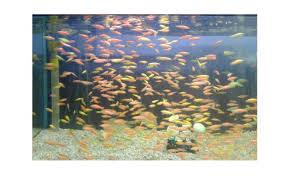 ornamental fish aqualife for all your aquarium needs