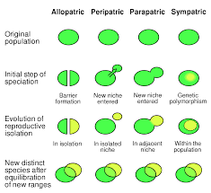 Asexual Reproduction Worksheets Types Of Speciation Evolution Definitions
