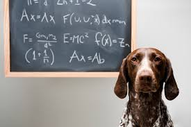 algorithms will train your dog