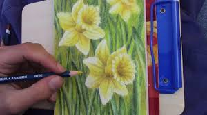 drawing daffodils in the park one new color every month 7 youtube