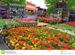nursery flower plant sales stock image image of natural 53551937