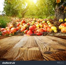 autumn apple orchard background stock photo 319452116 shutterstock