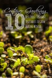 container gardening the 10 best frost tolerant vegetables to
