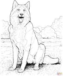 alaskan malamute coloring page free printable coloring pages