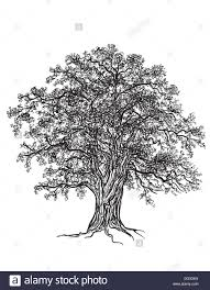 White Oak Tree Black And White Oak Tree With Leaves Drawn With Illustrator U0027s
