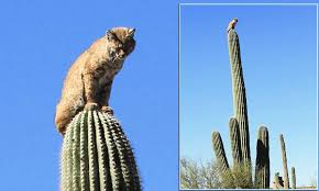 Seeking Cactus Cast How Did He Get Up There The Scaredy Cat Who Got Stuck Up A Cactus