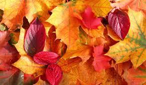 enjoy breathtaking fall foliage england