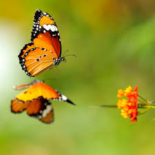 symolic meaning butterfly much