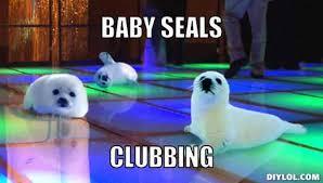 Seal Meme Generator - seals meme generator baby seals clubbing 87ca02 spirit in action
